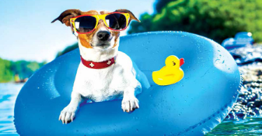 Best Summer Pet Care Tips for Your Furry Friends in 2020